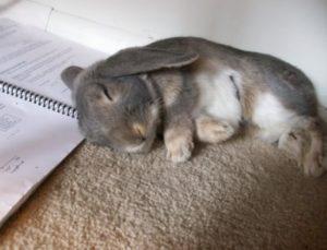Sae-K-rabbit-bunny-book-zec-orijas-